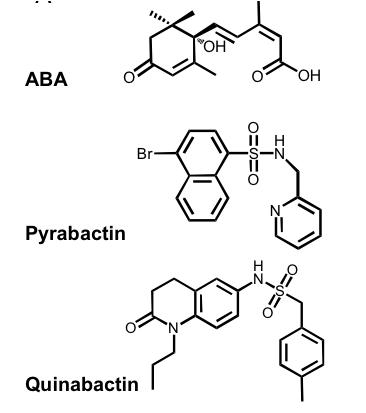 quinabactina