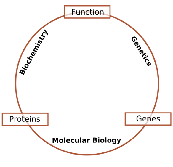 621px-Schematic_relationship_between_biochemistry,_genetics_and_molecular_biology.svg