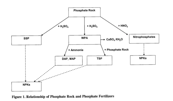 fosforo212