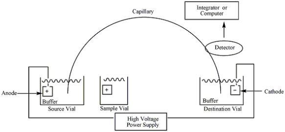 Capillaryelectrophoresis