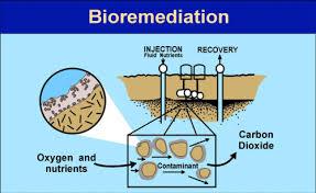 biorimediazione