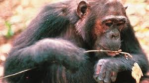 scimmiaramo