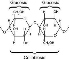 Cellulosa1