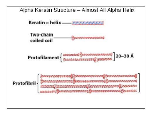 alfa-cheratina