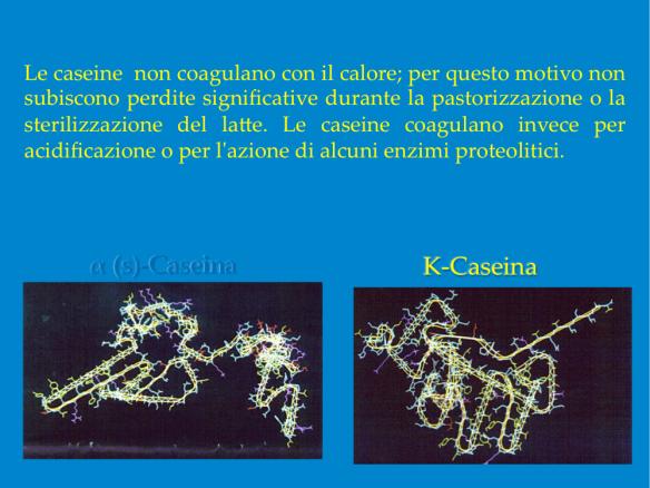 caseina2