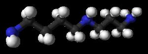 300px-spermidine-3d-balls