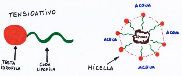 micella.png