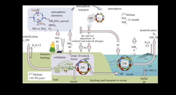 cattiva erezione con ciclo a metano