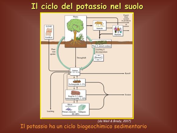 Elementi della Tavola Periodica: Potassio, K  | La Chimica e